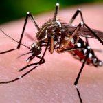 Semana de combate ao Aedes aegypti mobiliza 210 mil instituições